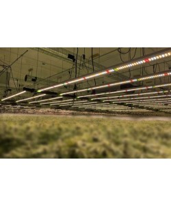 LED Grow Lights with large coverage area 640W full spectrum and 1772 µmol/s